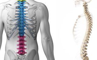 Анатомия позвоночника – шейный отдел, грудной отдел, поясничный отдел