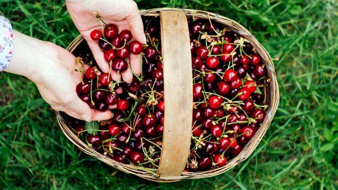 Вишневый сок источник антиоксидантов